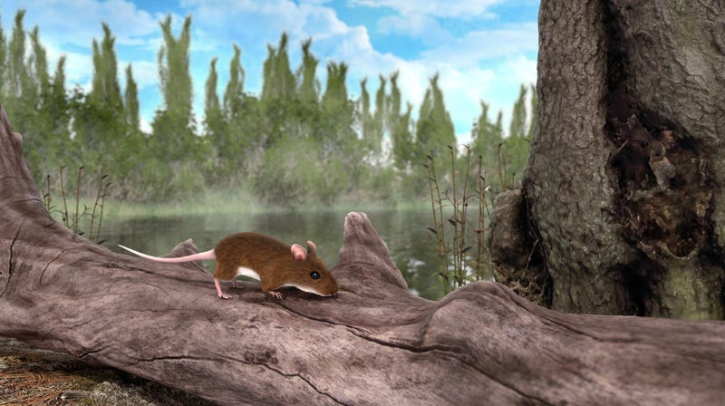 The artist's impression of the 3 million-year-old red-colored mouse.