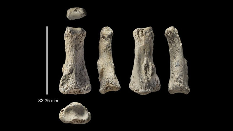 Six different views of the finger, which was found at the Al Wusta site in Saudi Arabia.