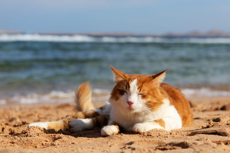 A chilling summer cat from the Hartz Blog