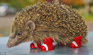 Illustration for article titled Sega Promotes Awareness Of Endangered Hedgehogs By Being Cruel To Them