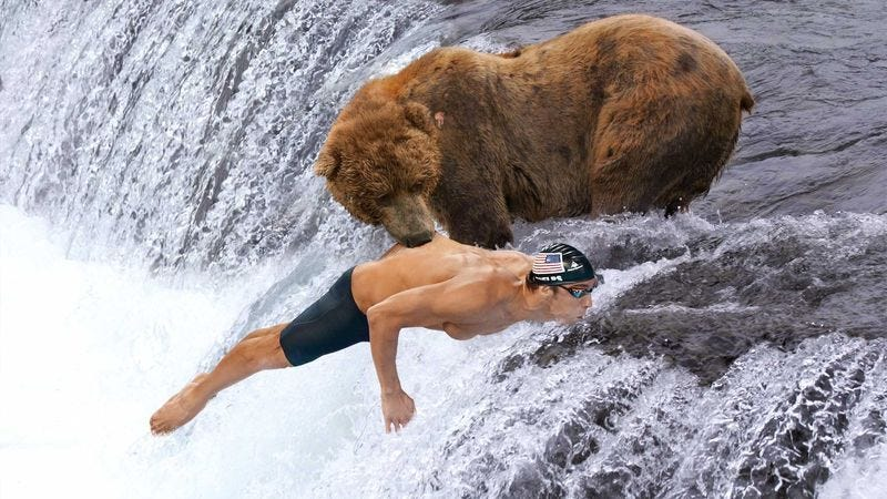 Illustration for article titled Grizzly Bear Catches Spawning Michael Phelps In Jaws