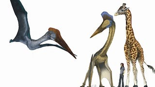 Illustration for article titled What would the world be like if pterosaurs and humans coexisted today? (Part II)