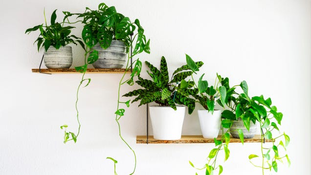 How to Pick Environmentally Friendly Houseplants, Because Yours Aren t