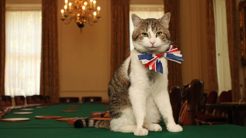 Illustration for article titled Larry The Downing Street Cat Is Excited For The Royal Wedding