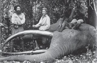 Illustration for article titled The Woman Who Shot Elephants for America's Natural History Museums
