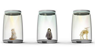 Illustration for article titled Finally, an ethical way to trap your favorite animals inside a jar