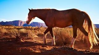 Illustration for article titled Why Horses Make Good Glue
