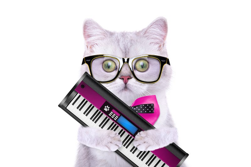 Illustration for article titled Jam Out With Your Cat to These Rocking Tunes