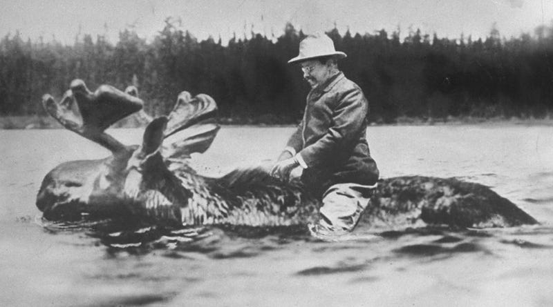 Illustration for article titled That Famous Photo of Teddy Roosevelt Riding a Moose Is Fake