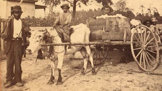 Man leading oxcart with cotton to cotton gin in South Carolina (J.A. Palmer, circa 1870/New York Public Library)