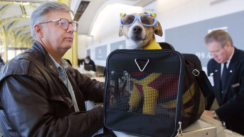 Illustration for article titled Where Your Emotional Support Animal Is Allowed to Sit on a Plane