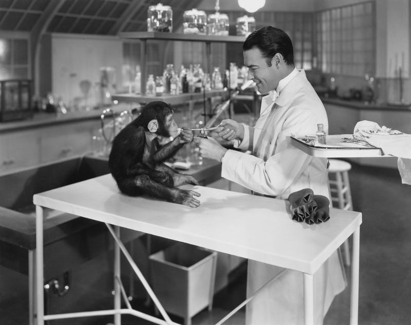 The pros and cons of animal testing and issues surrounding this matter