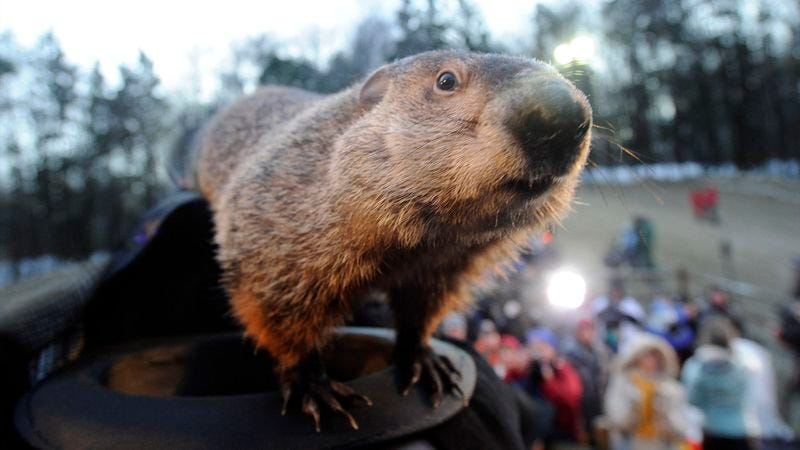 Illustration for article titled Depressed Groundhog Sees Shadow Of Rodent He Once Was