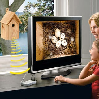 Illustration for article titled Nest Box with Infrared Camera Redefines Birdwatching