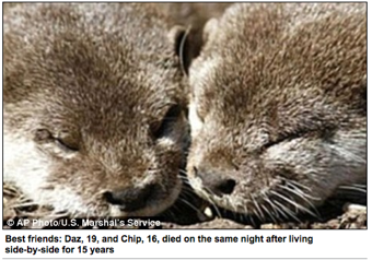 Illustration for article titled Bromantic Elderly Otter Couple Dies Together • Mississippi To Vote On Abortion Ban In 2011