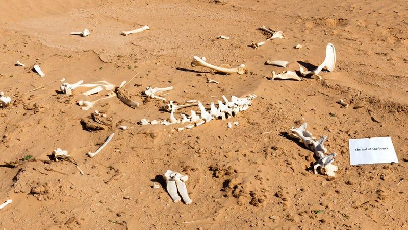 Illustration for article titled All Done Now: A Team Of Archaeologists Has Discovered A Pile Of Bones Labeled 'The Last Of The Bones'