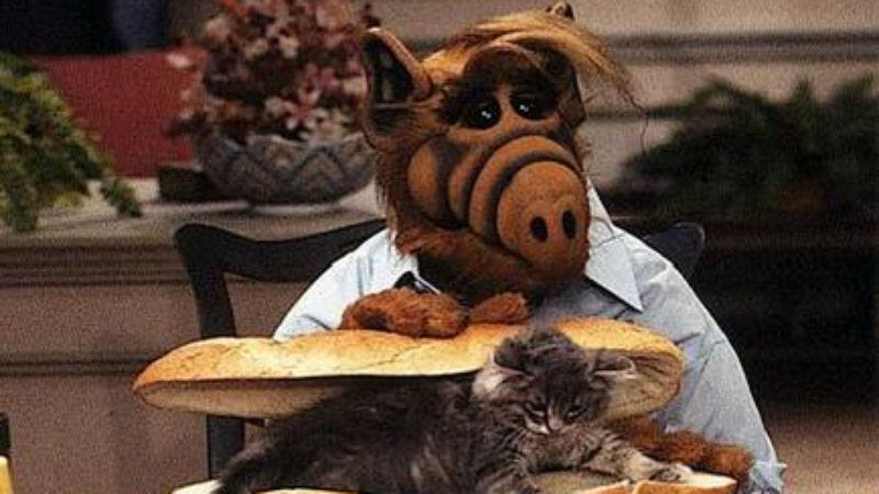 Illustration for article titled Humanity, spared from annihilation for one more day, celebrates by developing ALF movie
