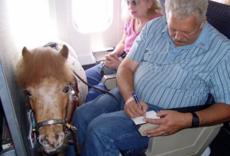 EE.UU. establece que las aerolíneas deben permitir que los caballos en miniatura vuelen como animales de servicio