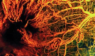 "Illustration for article titled Scientists Grow ""Ball of Human Blood Vessels"" in Mice"