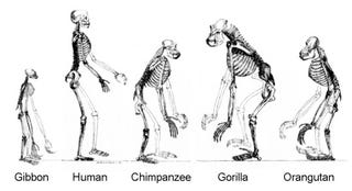 Illustration for article titled Creationism versus Evolution: Why presenting evidence won't work.