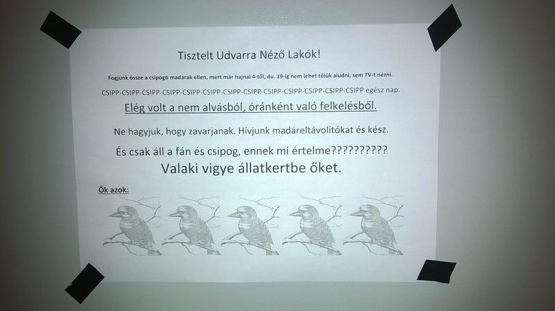 Illustration for article titled Kiborult a madárdalra, intézkedést követel a lakó