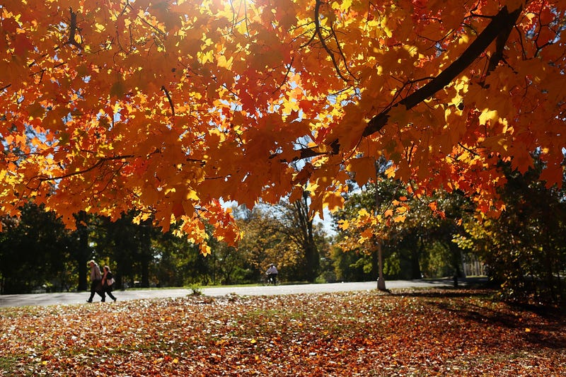 Its time to spend a few weeks telling yourself you like fall voltagebd Images