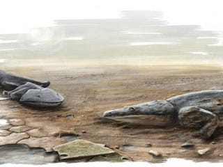 Illustration for article titled Car-Sized Salamander Fossils Found In Mass Grave In Portugal