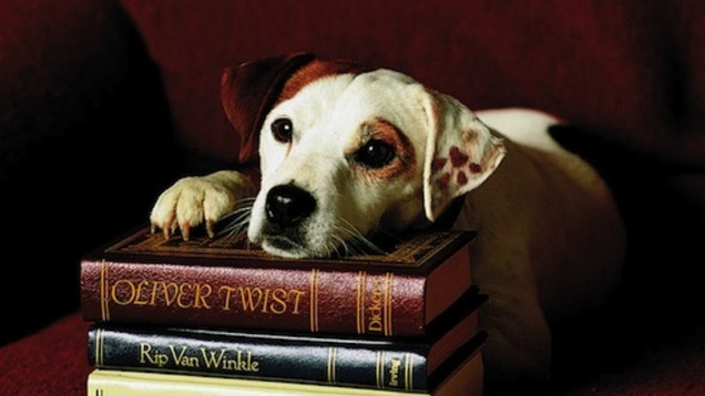 Classic Books I Only Care About Because a Jack Russell Terrier Told Me To