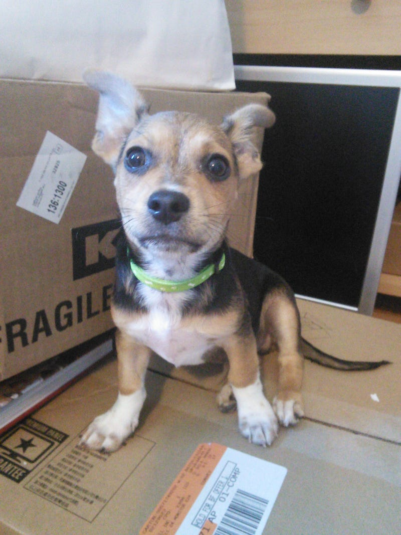Illustration for article titled So, I was unpacking some old boxes today and I found a puppy