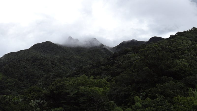 The Luquillo mountains in the El Yunque National Forest.