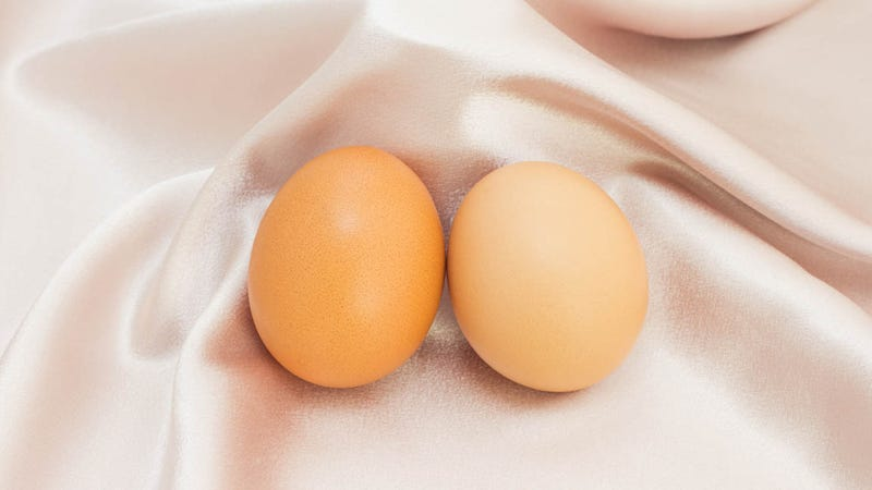 One Egg Created From Two Mothers Could Prevent Genetic Disorders