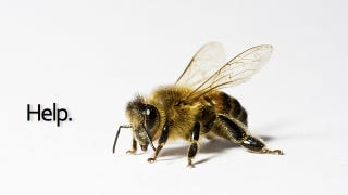 Illustration for article titled Biotech Company Blamed for Bee Collapse Buys Leading Bee Research Firm