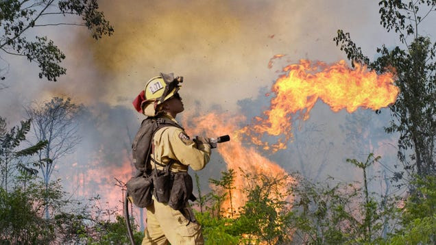 Brazilian Government Equips Firefighters With Flamethrowers To Combat Massive Amazon Rainforest