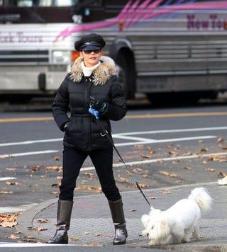 Illustration for article titled Catherine Zeta Jones Walks Her Own Dog