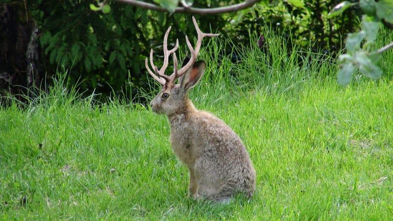school-tits-deer-antlerstures-barely-legal-free