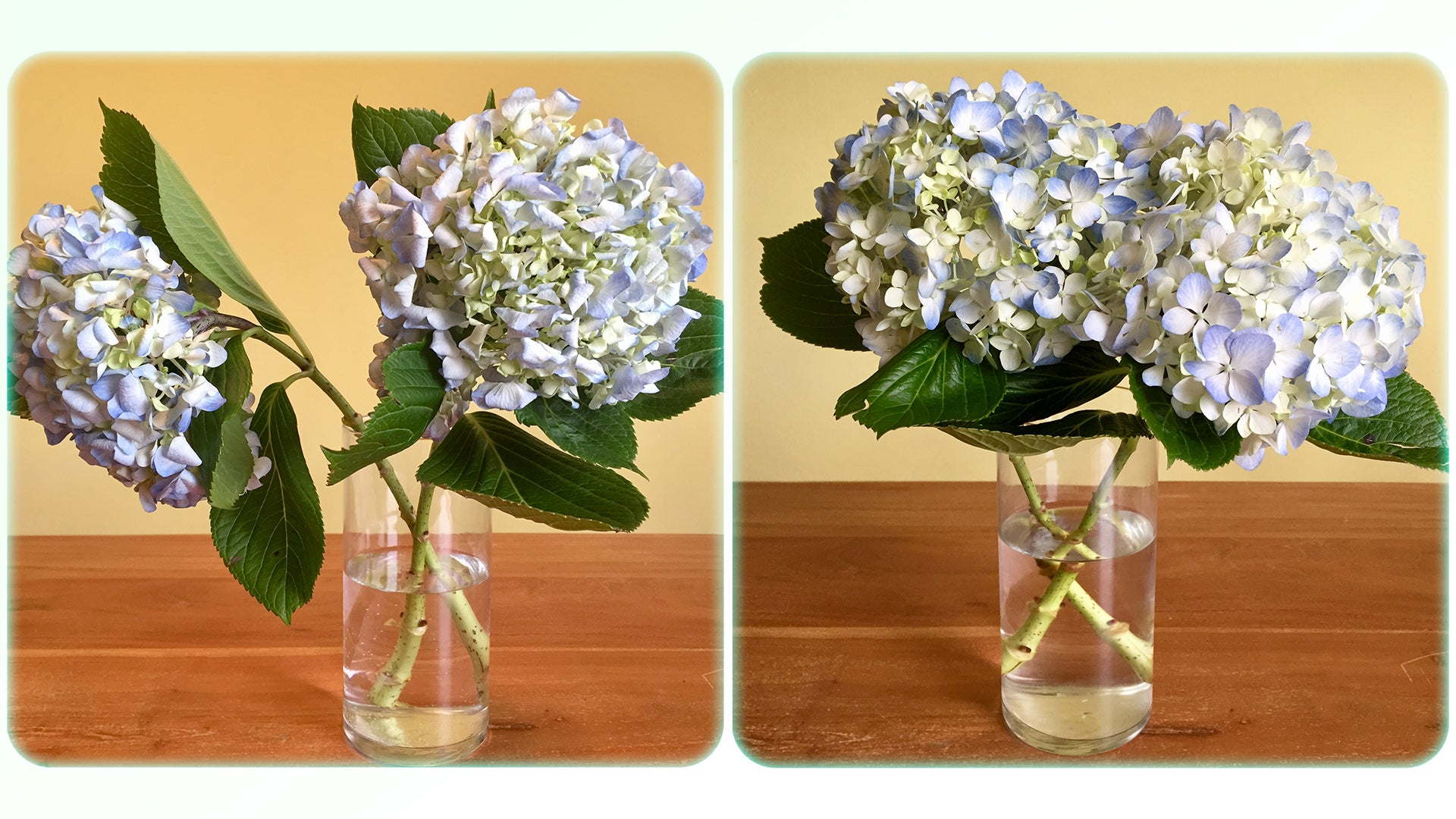 Lifehacker & How to Revive Dead Flowers