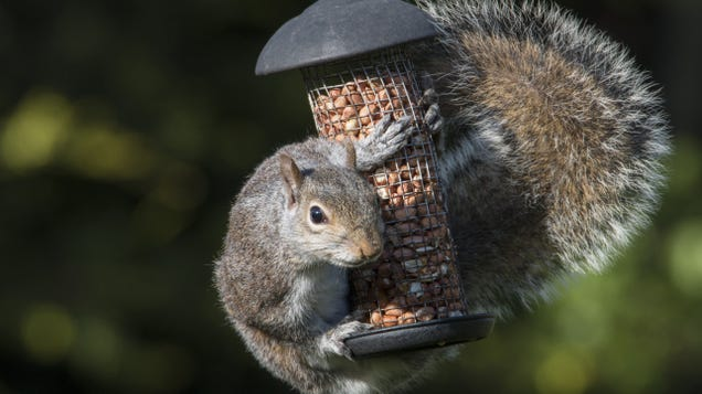 Keep Squirrels Out of Your Bird Feeder With Cayenne