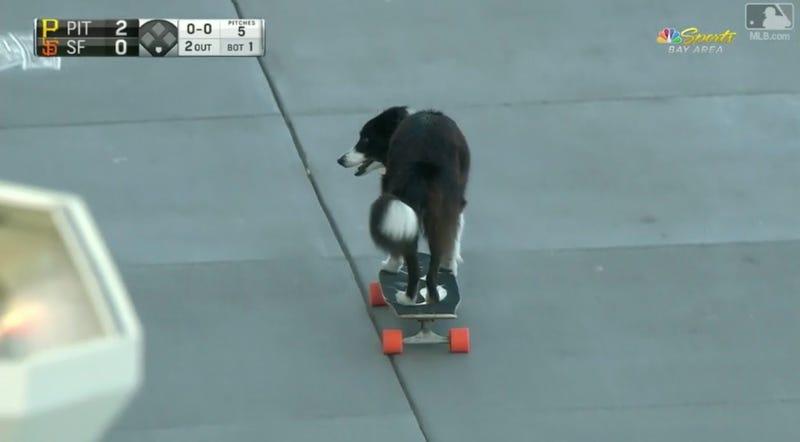 Illustration for article titled Hell Yeah, Skateboarding Dog