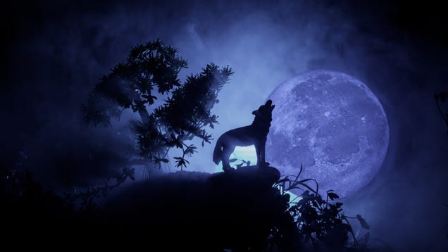How to View Tonight s Wolf Moon