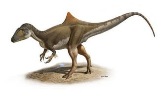 Illustration for article titled First Hump-Backed Dinosaur Could Eat Several Humans for Brunch