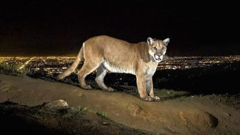 How Wild Animals And Cities Are Adapting To Each Other
