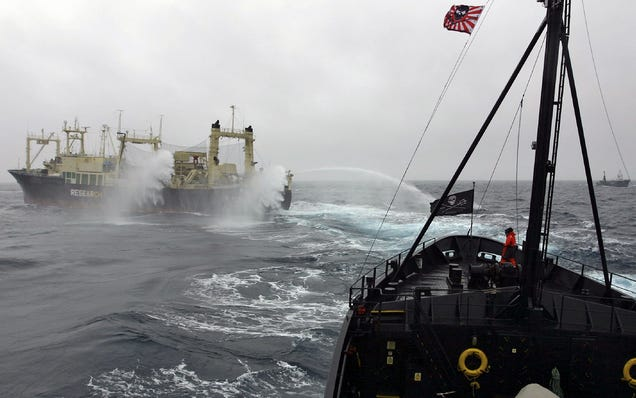 A Japanese whaling vessel in the Ross Sea fires its water cannons in response to a close encounter with a New Zealand vessel in February, 2009. Image: Sea Shepherd Conservation Society/Flickr