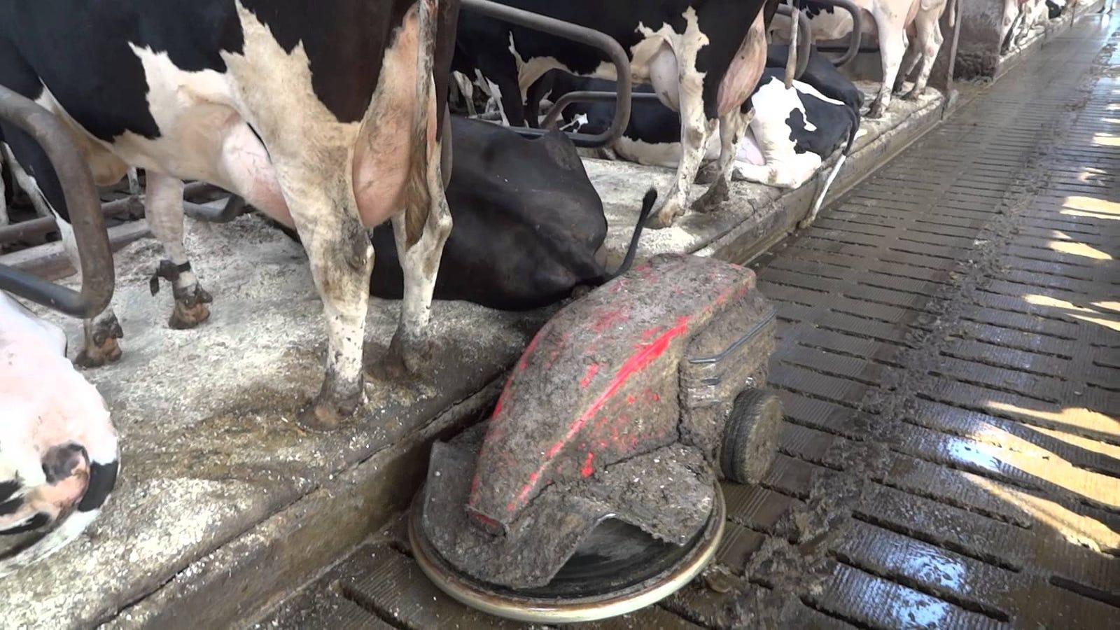amul milk v s loose milk Home essays amul chocolate amul chocolate topics: milk essay on amul milk v s loose milk.