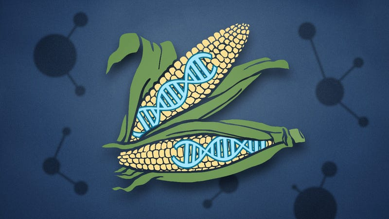 Illustration for article titled The Biggest Concerns About GMO Food Aren't Really About GMOs