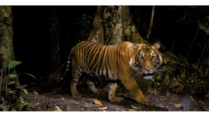 Illustration for article titled These Majestic Wildlife Photos Will Blow Your Little Human Mind