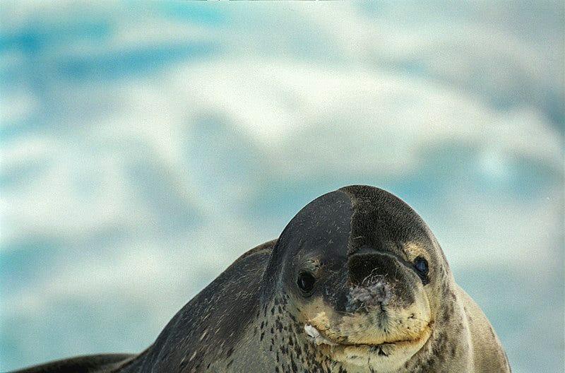 Illustration for article titled Científicos buscan a los dueños de este vídeo encontrado en un USB en el interior de la cacacongeladade una foca