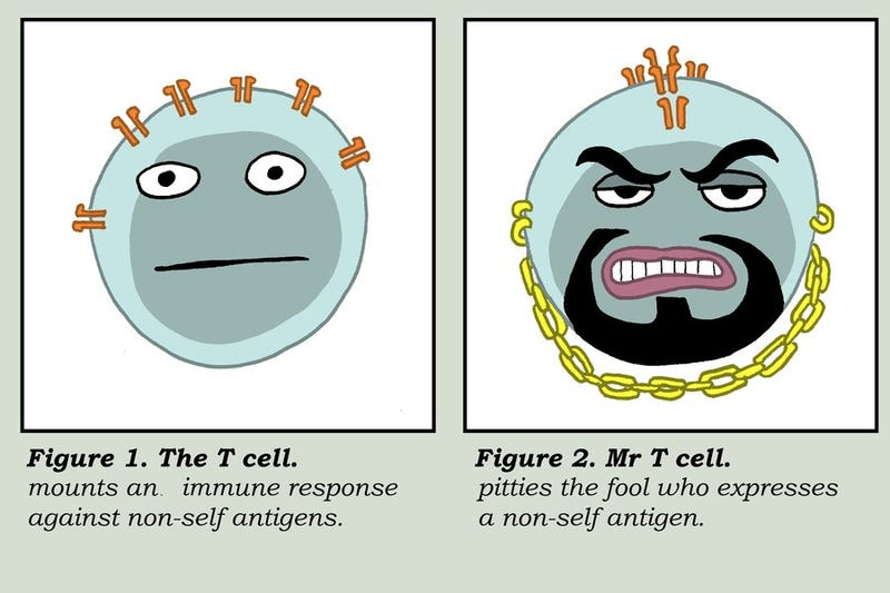 Illustration for article titled Ask Me Anything about the Immune System - Neisseria