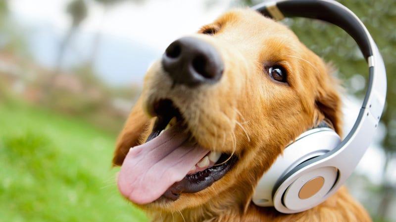 Хостинг собака как подключить домен к хостингу wix