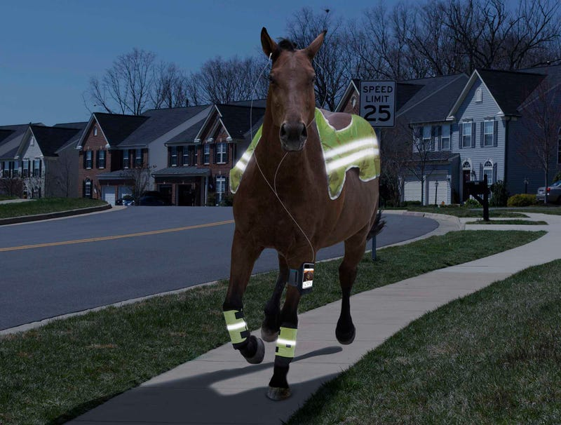 Illustration for article titled Horse Always Running Through Neighborhood Probably In This Year's Kentucky Derby