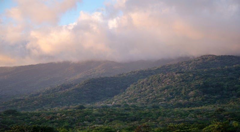 Guanacaste National Forest, Costa Rica, at sunset. Image Credit: thejaan/Flickr